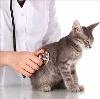 Ветеринарные клиники в Макарьеве